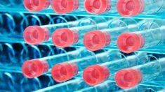 Cómo se realiza un test de coronavirus y un auto- análisis
