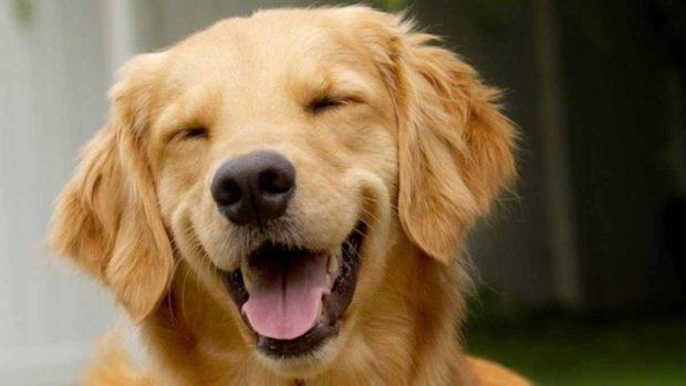 ¿Hay risa de animales?