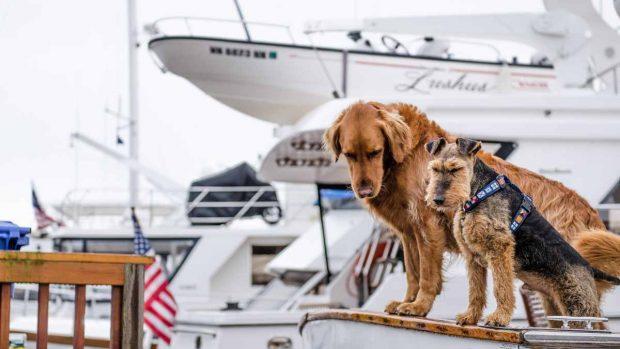 Perros en un barco
