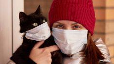 Estudio en China sobre gatos y coronavirus