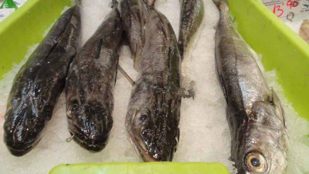 Pescadilla en salsa de calabacín