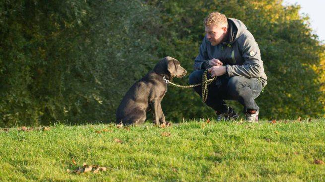 Personalidad dueño y perro