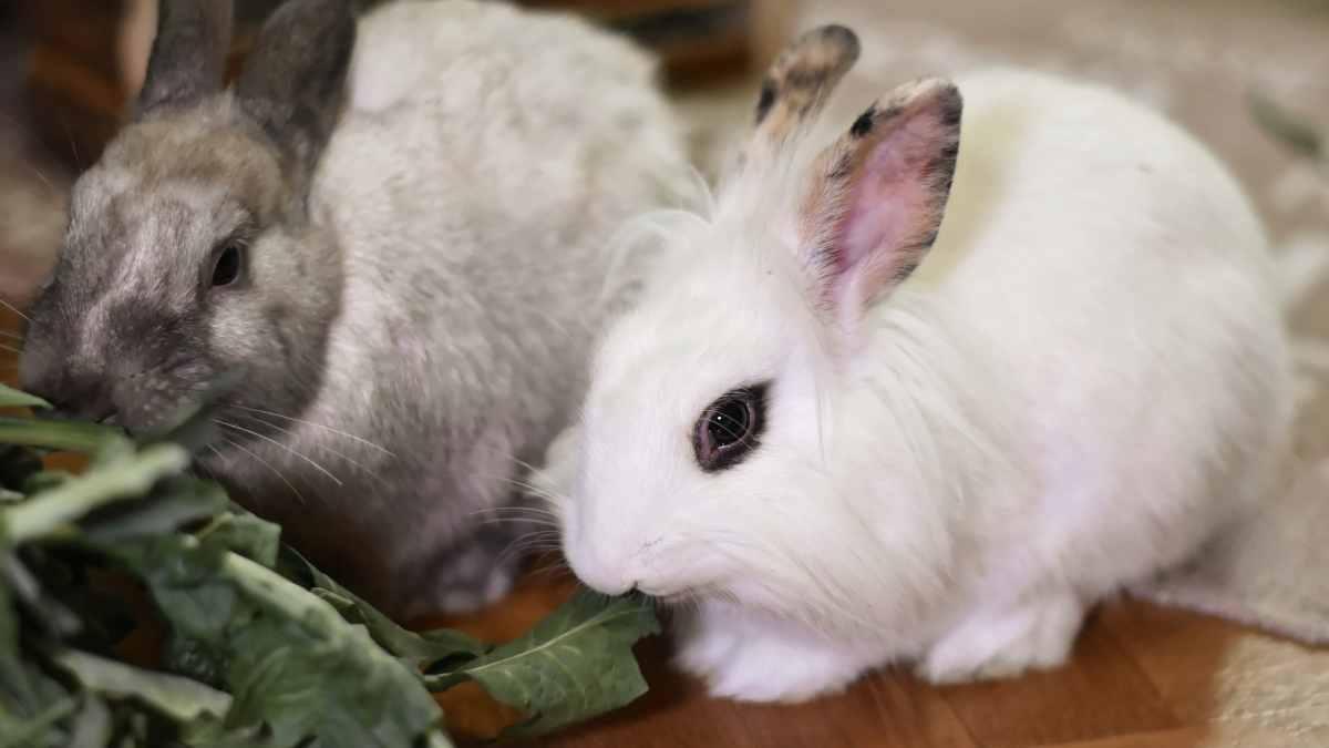 Problemas de dientes en tu conejo