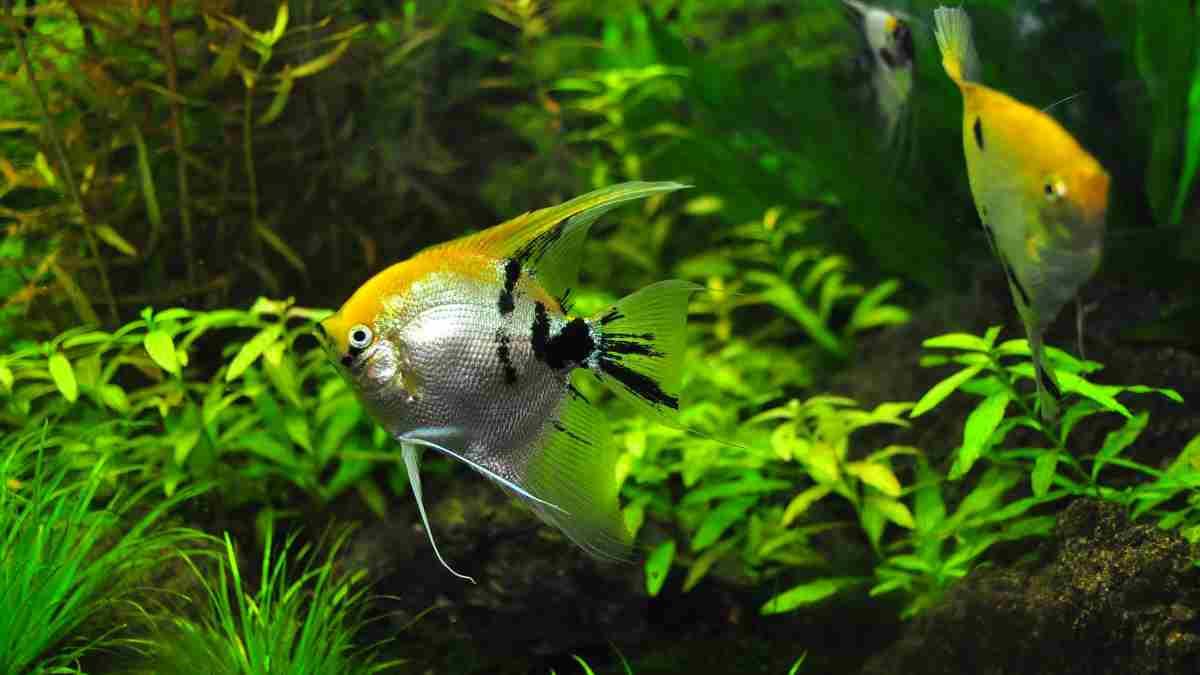 Decorar acuario con plantas