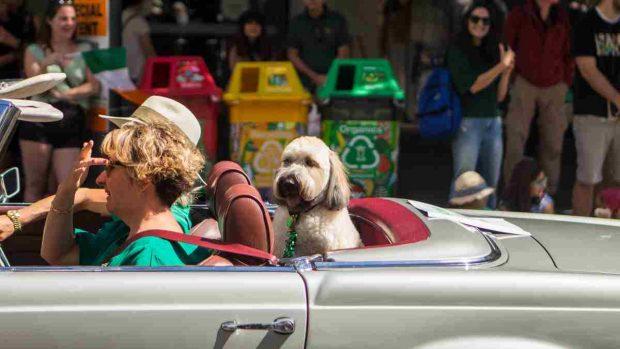 Mareos del perro cuando viaja
