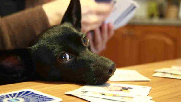 Tu perro durante el coronavirus