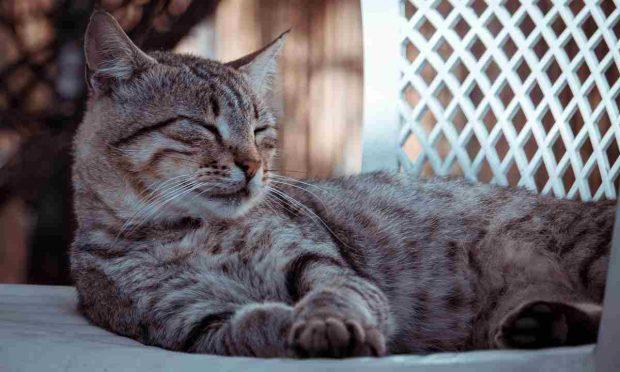 ¿Cuánto duerme tu gato?