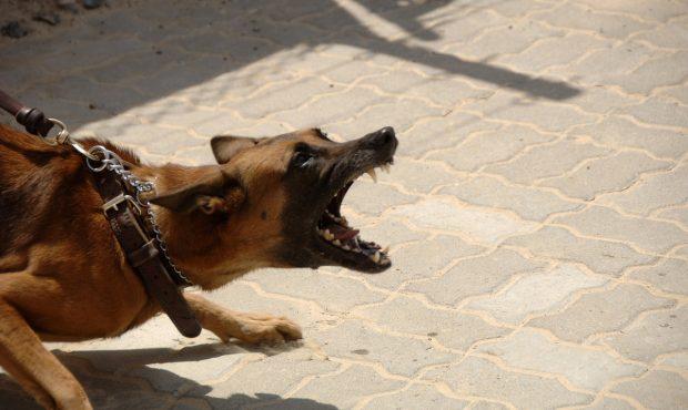 Cómo tratara tu perro agresivo