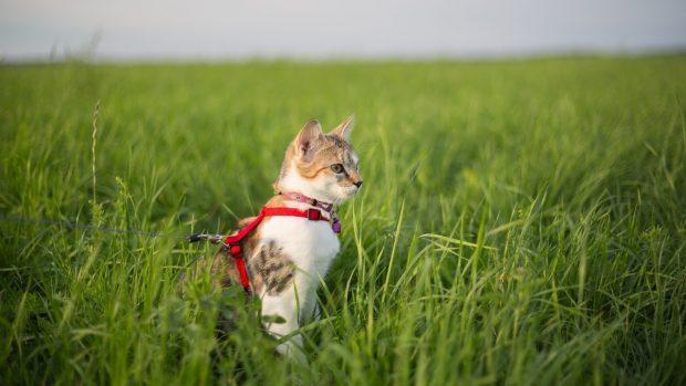 El gato y la correa