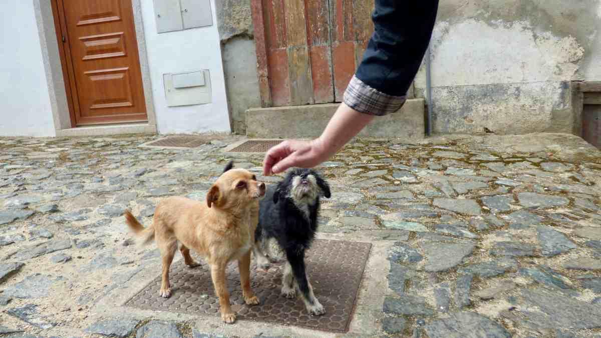 Contagio coronavirus desde perros callejeros