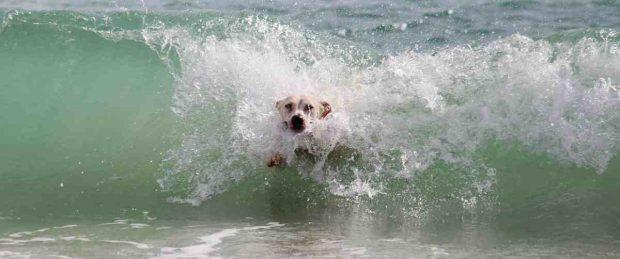 El perro en el mar