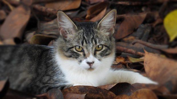 Gato y coronavirus