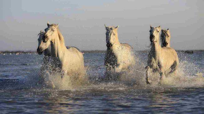 Curiosidades del caballo