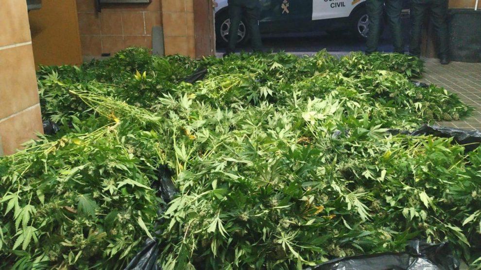 Granada.- Sucesos.- Más de mil plantas de marihuana incautadas en dos operaciones antidroga en Atarfe y Ugíjar