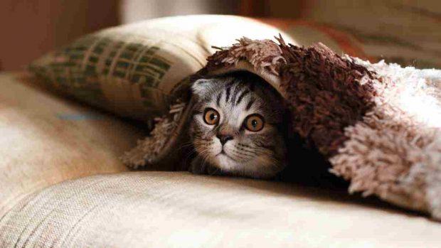 Socialización gato