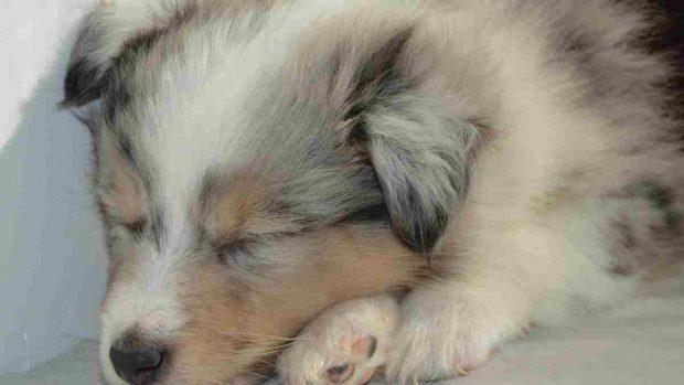 ¿Cuánto duerme un cachorro?