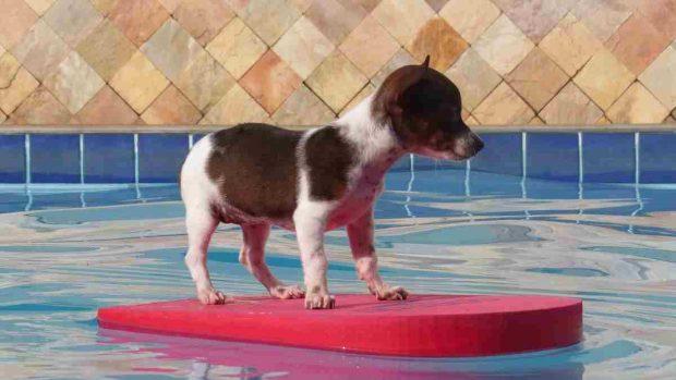 Comprar piscina a perro