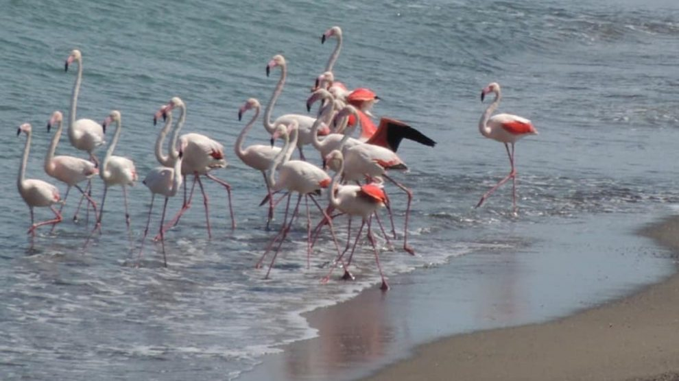 Las mejores playas y calas para desconectar en Málaga