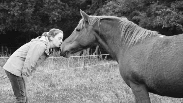 ¿Cómo acariciar a tu caballo?