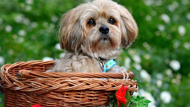 Cachorro con pelaje