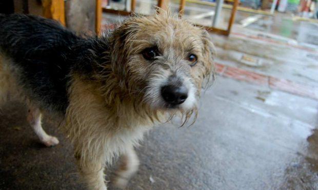 Mascotas lluvia