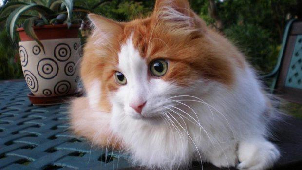 Gato cariñoso