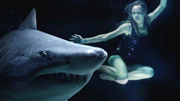 Tiburón, mala fama