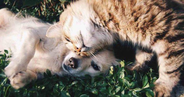 Peleas entre gatos y perros