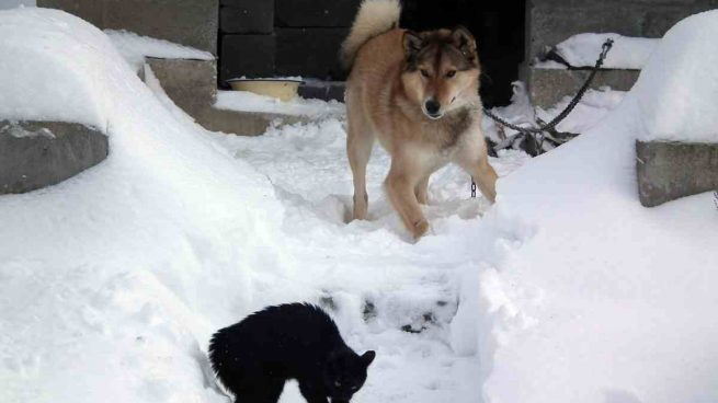 Peleas entre perro y gato