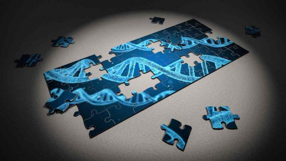 Cómo son el ADN y el ARN