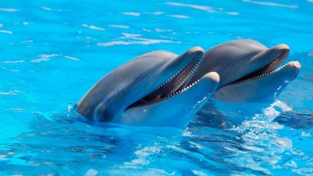 El delfín, beneficios
