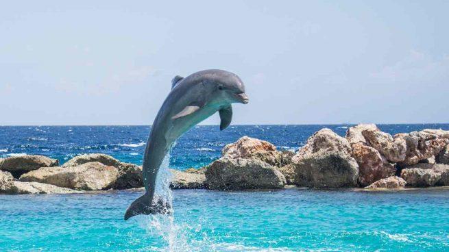 Delfín, un amimal simpático