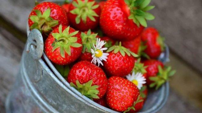Receta de panacota de fresas fácil de preparar