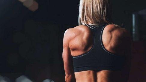 La grasa y el músculo tienen células totalmente diferentes