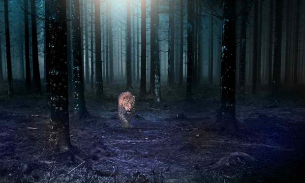 Felino en la selva