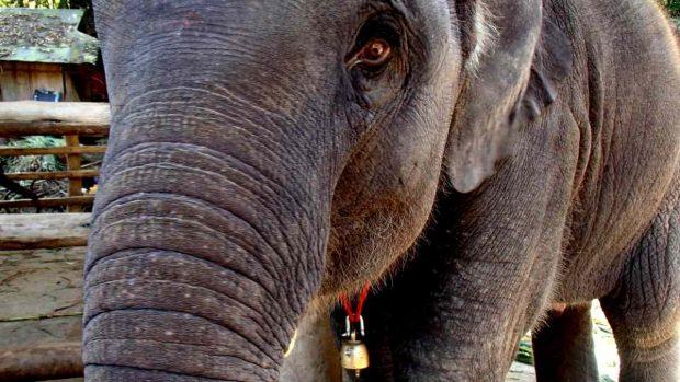 Elefantes en el cine
