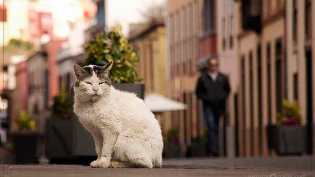 Gato se orienta