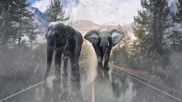 Selvas del mundo