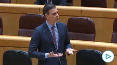 Pedro Sánchez en la sesión de control del Senado