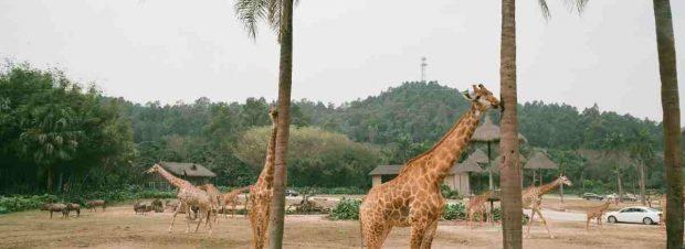 Llevar a los niños al zoo