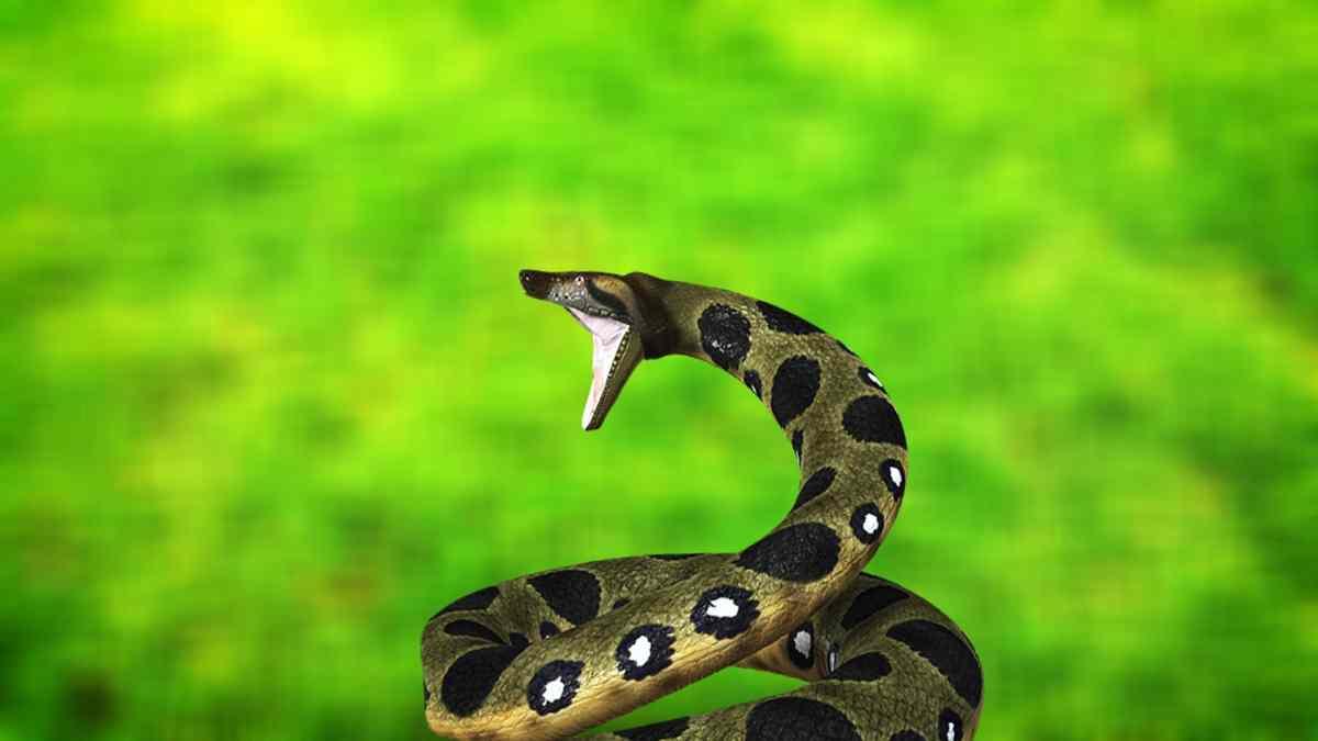 Fauna de las selvas, anaconda