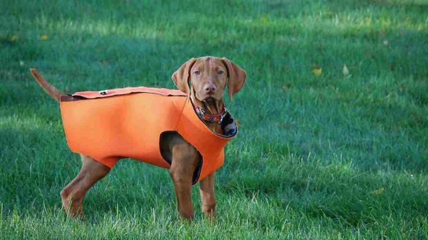 Chaleco perro