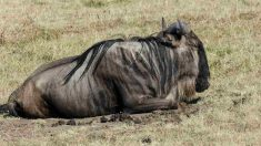 Mejores safaris en África