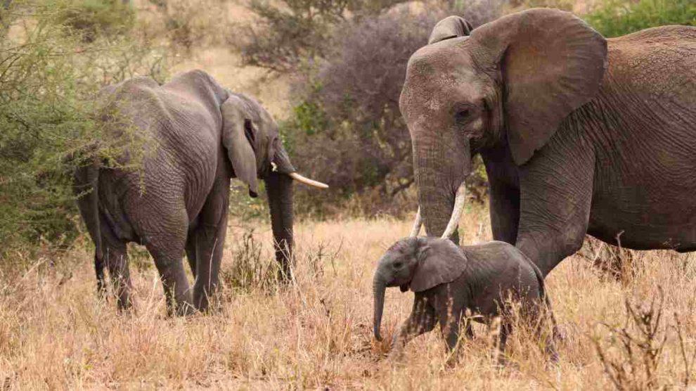 El mejor safari para hacer en Africa