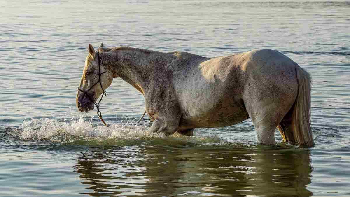 Refresca a tu caballo en verano