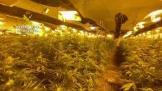 Subterráneo lleno de marihuana en Níjar