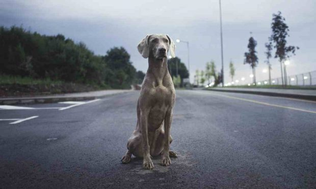 Perro en la calle