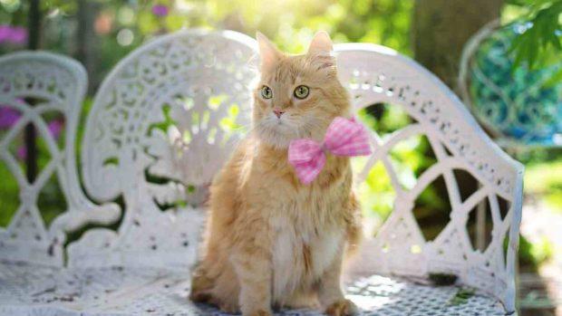 Refrescado gato en verano