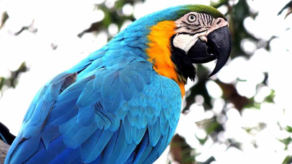 Disfruta de aves en la selva
