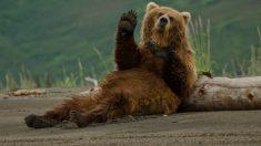 Facebook: Un oso siembra el caos en un pueblo al subirse por los balcones